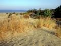 vegetazione-sulle-dune-di-Piscinas.jpg